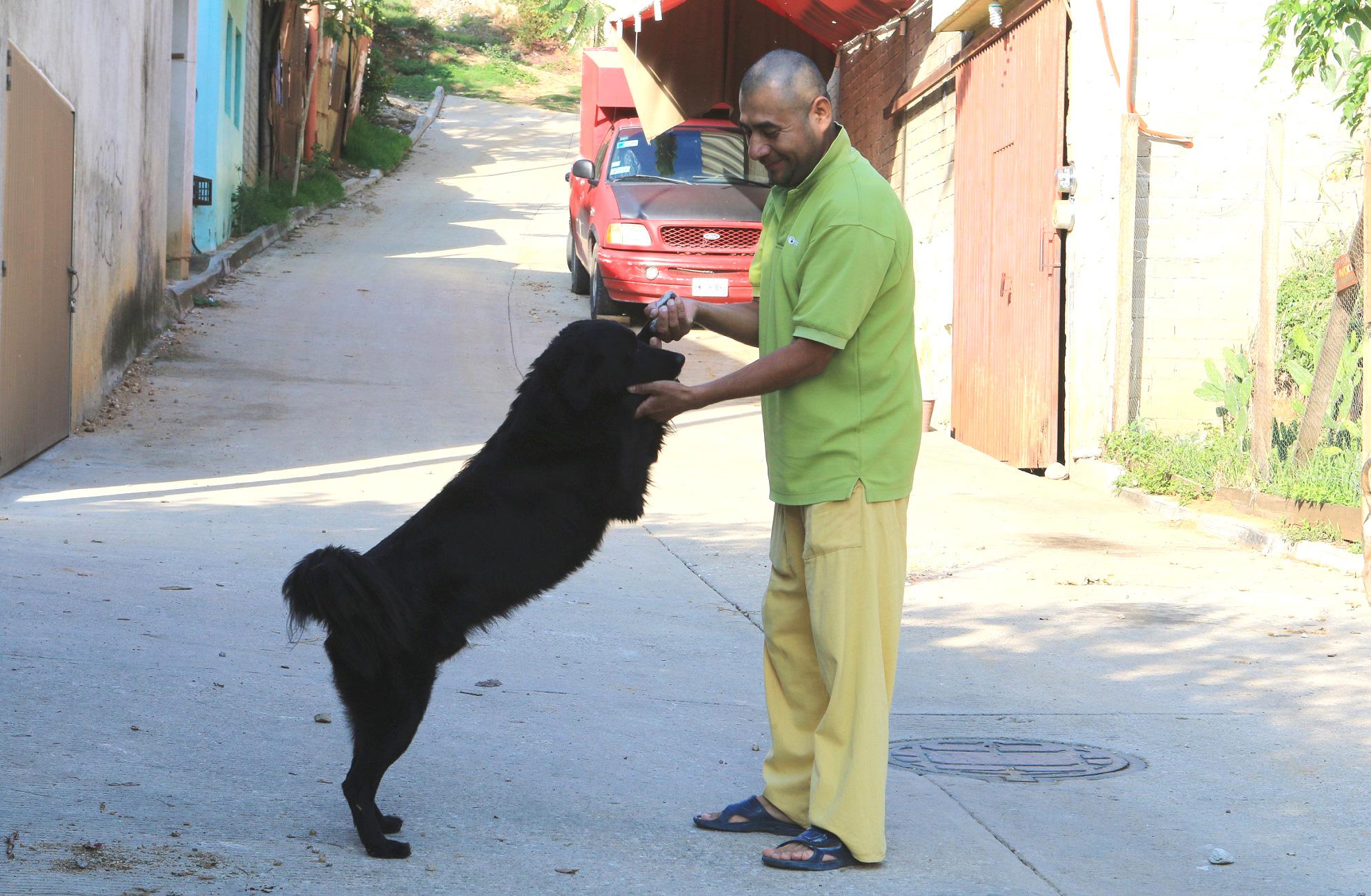 Photo of En tiempo y forma atiende denuncias el Juzgado especializado en maltrato animal de Oaxaca de Juárez