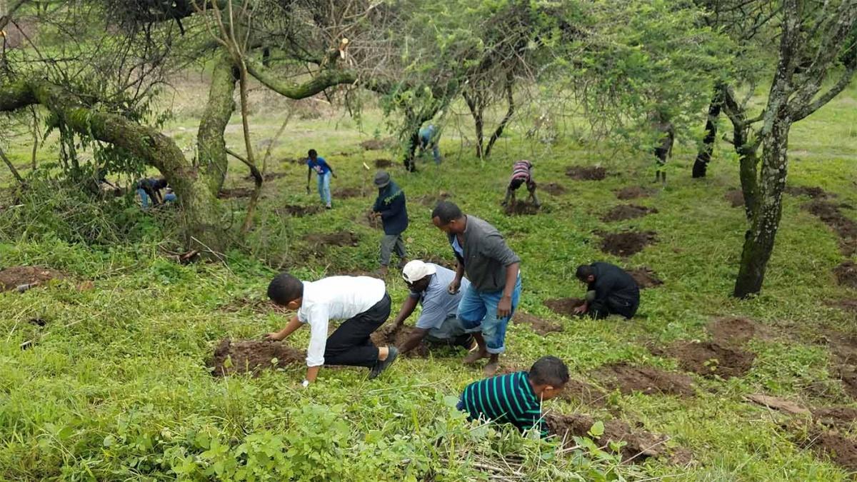 Photo of Récord verde: Siembra Etiopía 353 millones de árboles ¡en un día!