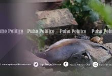 Photo of CUERPO EN ESTADO DE PUTREFACCIÓN ES ENCONTRADO SOBRE RIBERAS DEL ATOYAC