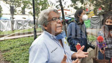Photo of ÁRBOLES DEL ZÓCALO, SE DEBEN DE DEJAR EN MANOS DE ESPECIALISTAS: JORGE LUIS CRUZ ALVARADO PRESIDENTE DE LA ASOCIACIÓN OAXACA FÉRTIL