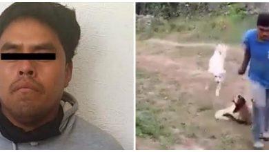 Photo of Detienen a sujeto que mató a machetazos a perrita en Ixtapaluca