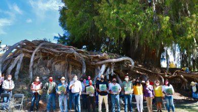 Photo of Reconoce Semaedeso la belleza arbórea de la región de la Mixteca
