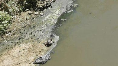Photo of Hallan a bebé en avanzado estado de putrefacción sobre el Río Atoyac