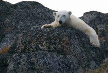 Photo of Calentamiento global causó fenómenos sin precedente este año