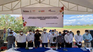 Photo of Establece Sedapa alianzas estratégicas en favor del campo oaxaqueño